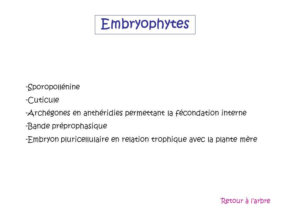 Embryophytes Sporopollénine Cuticule