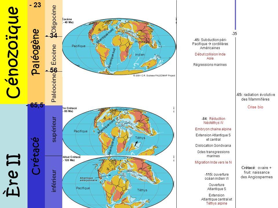 Cénozoïque Ère II Paléogène Crétacé - 23 - 34 - 56 - 65,5 Oligocène
