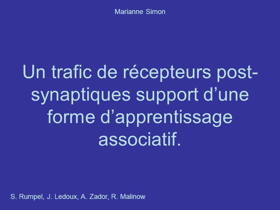 Marianne Simon Un trafic de récepteurs post-synaptiques support d'une forme d'apprentissage associatif.