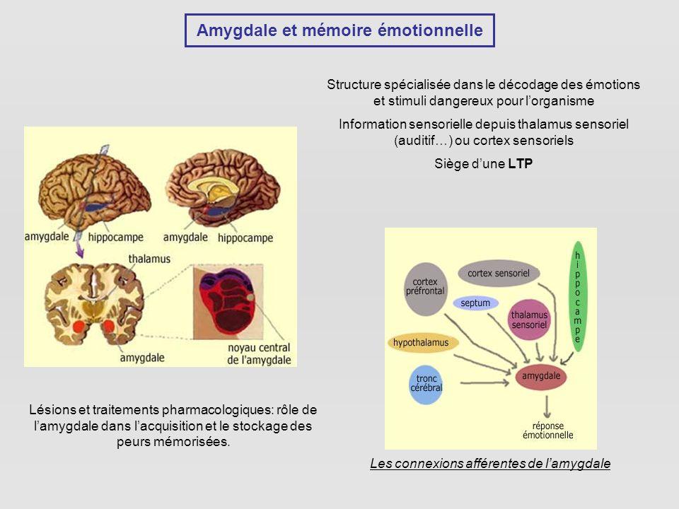 Amygdale et mémoire émotionnelle