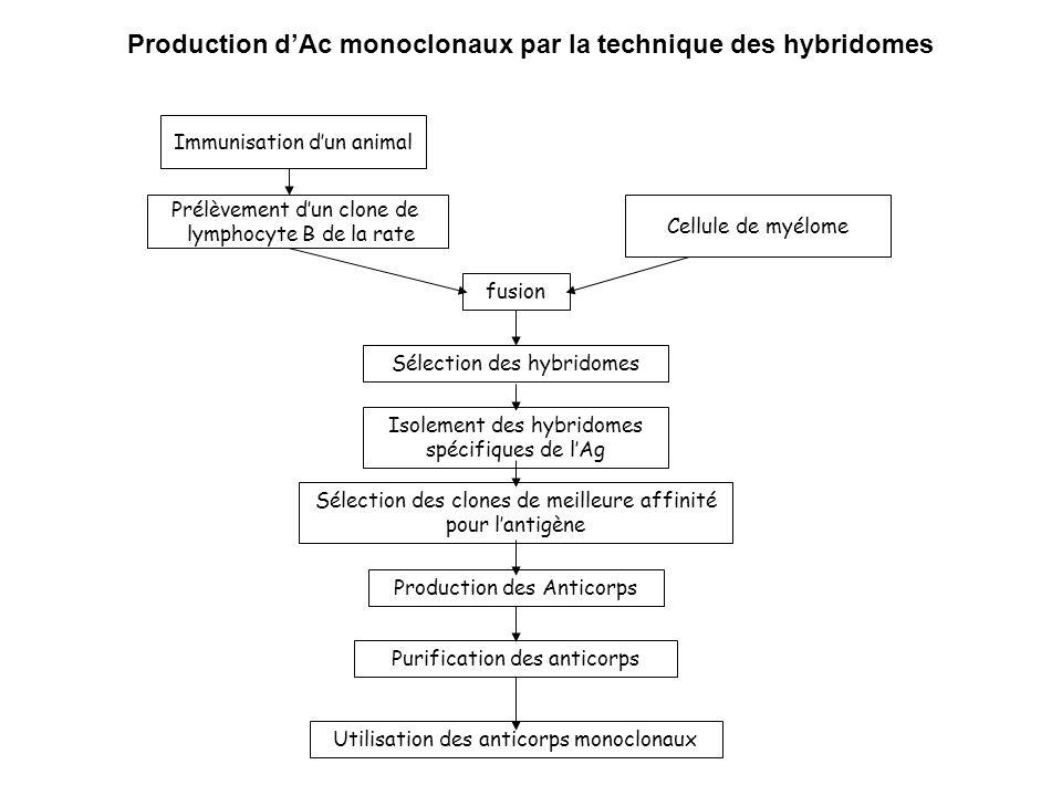 Production d'Ac monoclonaux par la technique des hybridomes