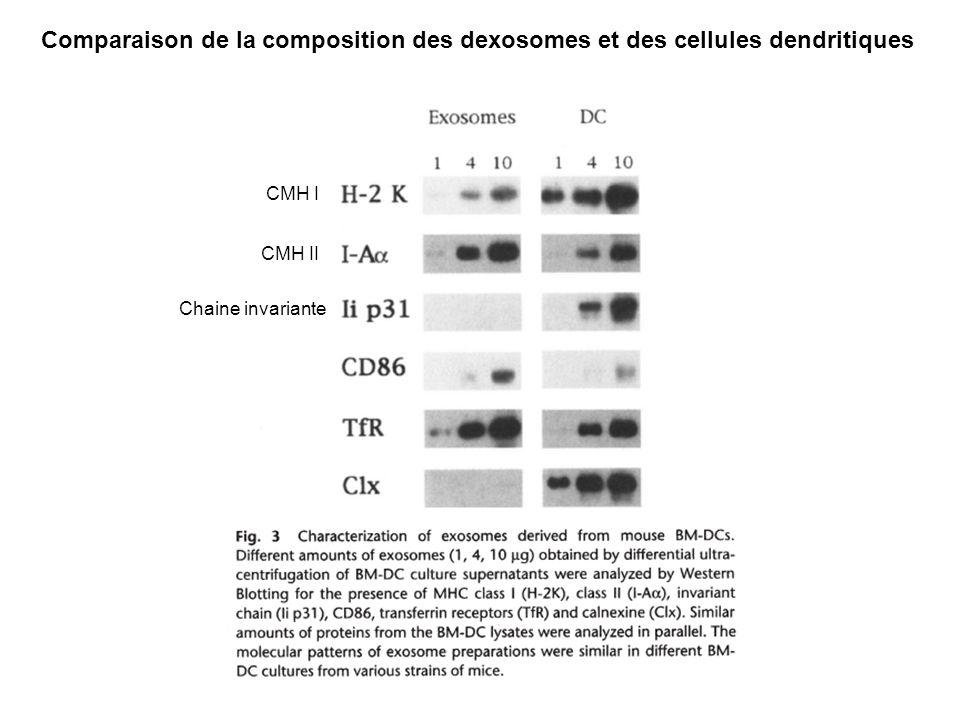 Comparaison de la composition des dexosomes et des cellules dendritiques