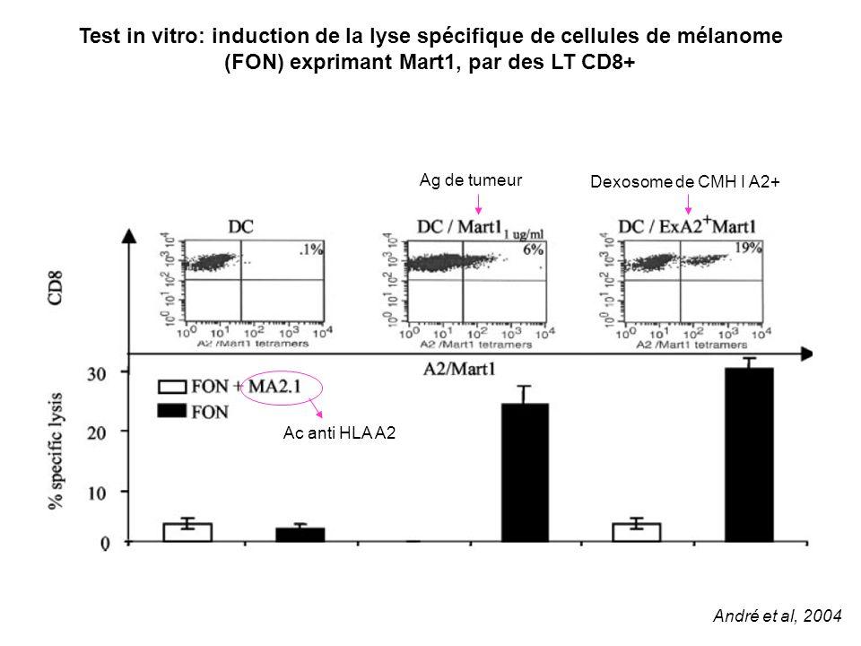 Test in vitro: induction de la lyse spécifique de cellules de mélanome (FON) exprimant Mart1, par des LT CD8+