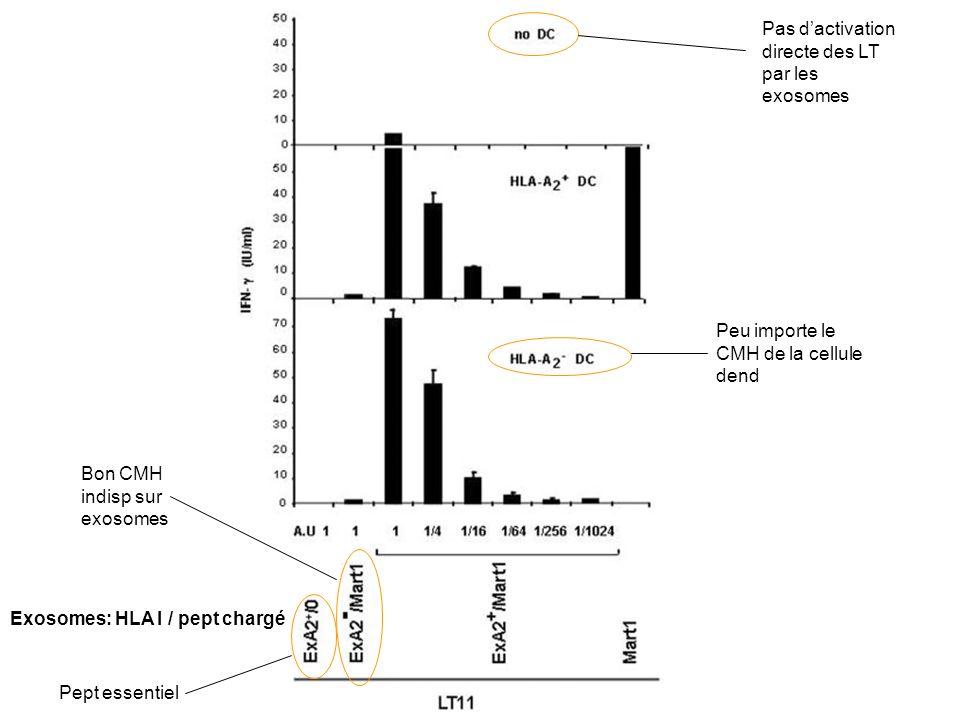 Pas d'activation directe des LT par les exosomes