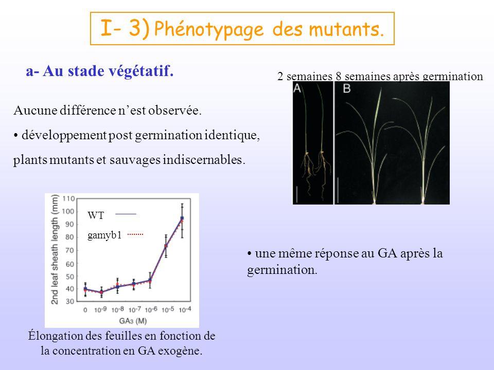 I- 3) Phénotypage des mutants.
