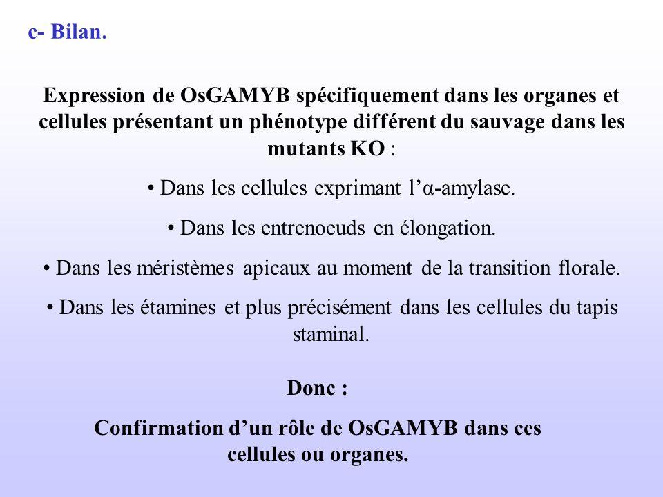 Confirmation d'un rôle de OsGAMYB dans ces cellules ou organes.