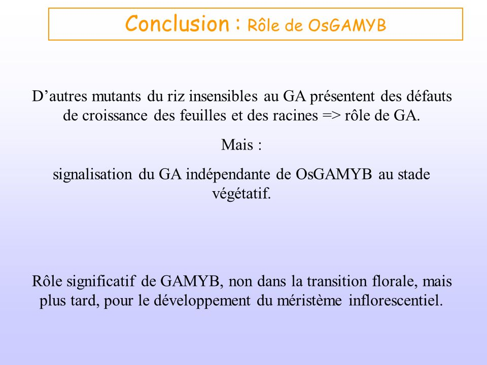 Conclusion : Rôle de OsGAMYB