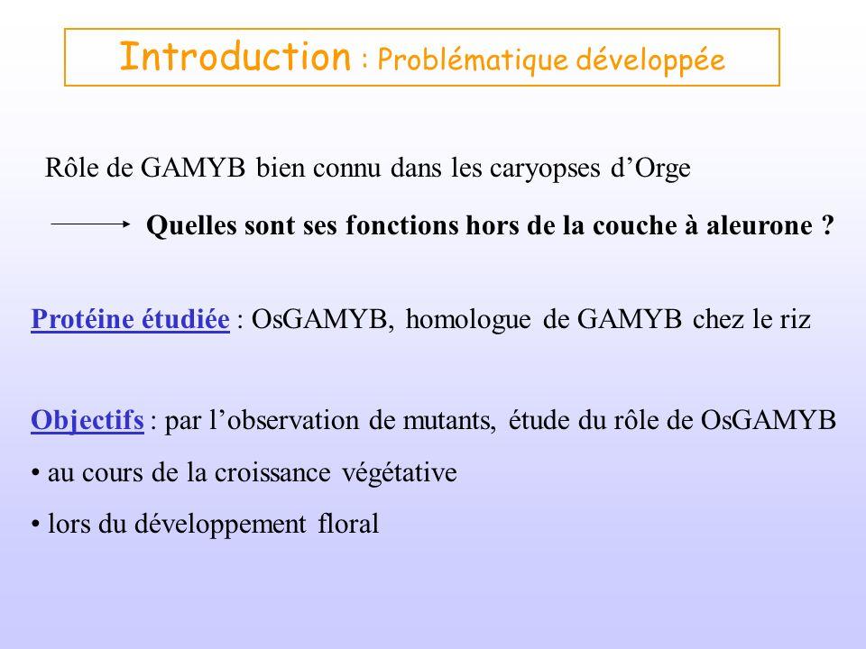 Introduction : Problématique développée