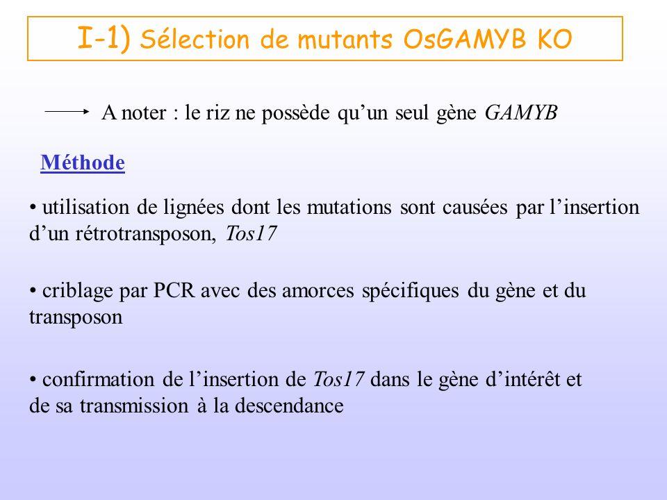 I-1) Sélection de mutants OsGAMYB KO