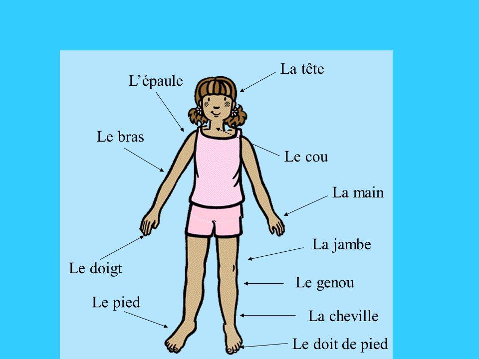 La tête L'épaule. Le bras. Le cou. La main. La jambe. Le doigt. Le genou. Le pied. La cheville.