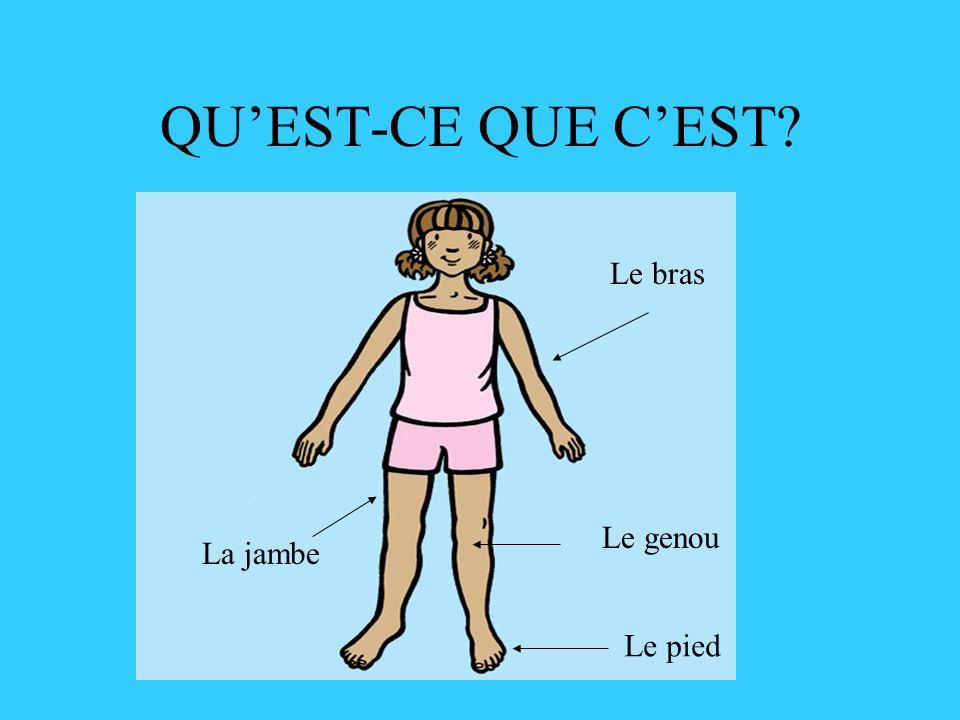 QU'EST-CE QUE C'EST Le bras Le genou La jambe Le pied