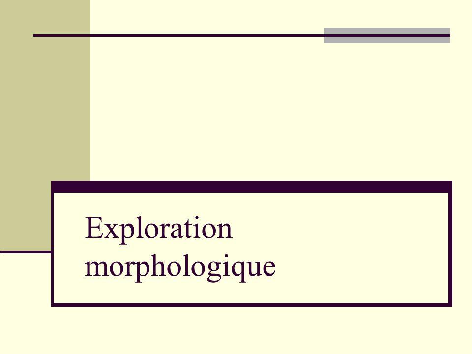Exploration morphologique