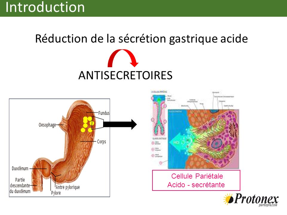 Introduction Réduction de la sécrétion gastrique acide ANTISECRETOIRES