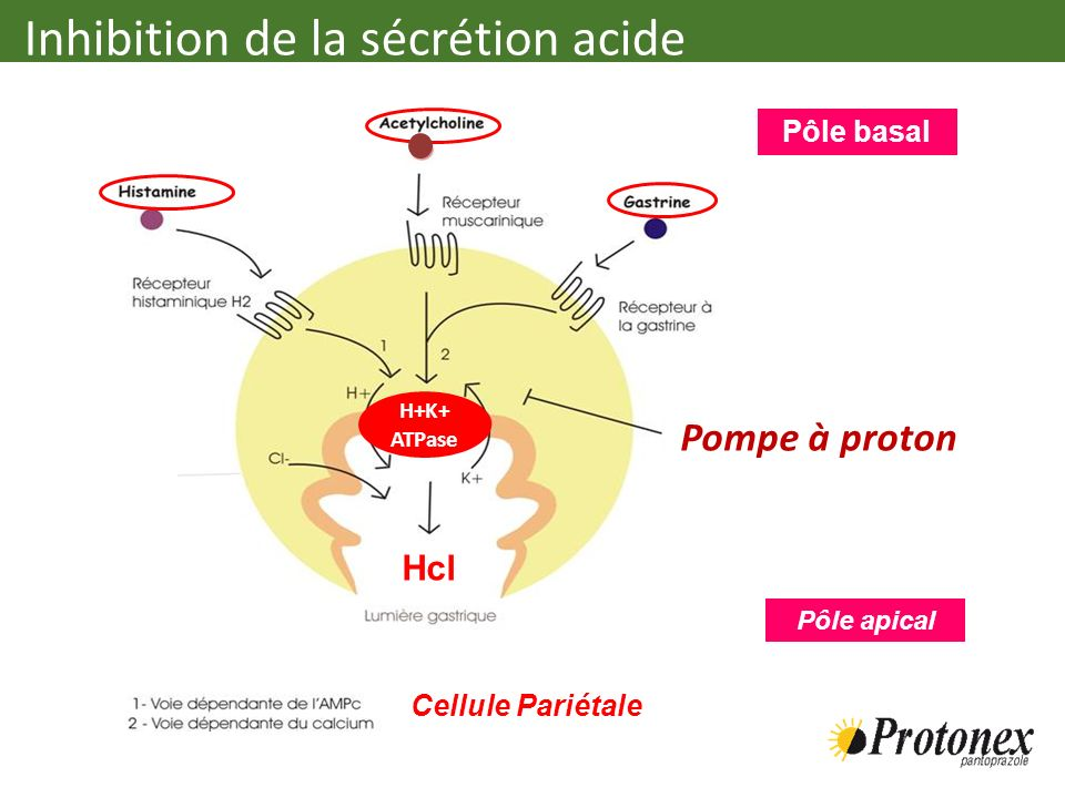 Inhibition de la sécrétion acide