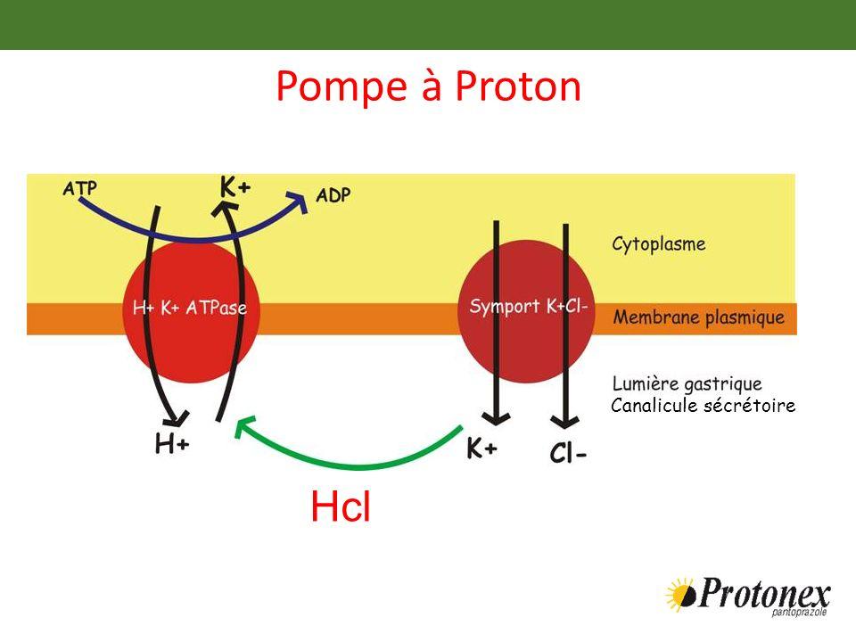 Pompe à Proton Canalicule sécrétoire Hcl