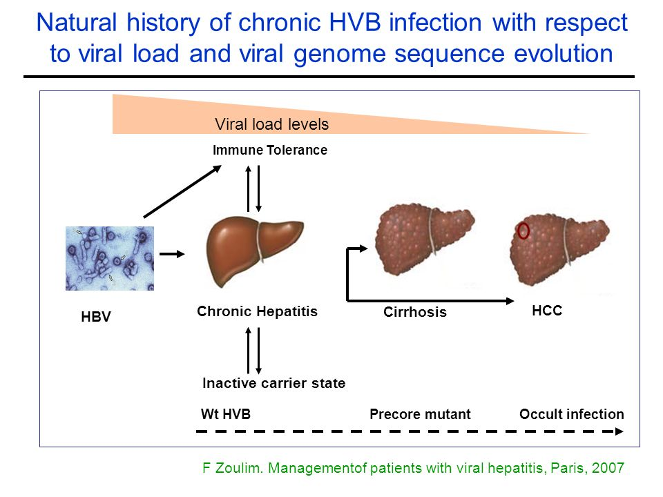 Natural history of chronic HVB infection with respect to viral load and viral genome sequence evolution