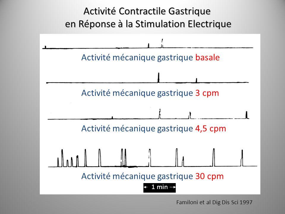 Activité Contractile Gastrique en Réponse à la Stimulation Electrique