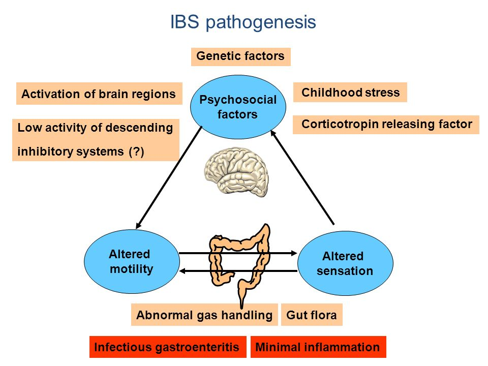 IBS pathogenesis Infectious gastroenteritis Minimal inflammation