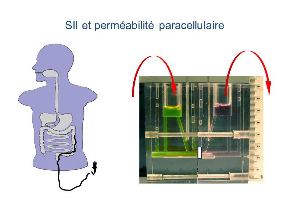 SII et perméabilité paracellulaire