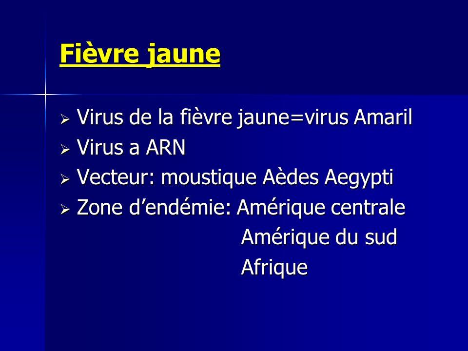 Fièvre jaune Virus de la fièvre jaune=virus Amaril Virus a ARN