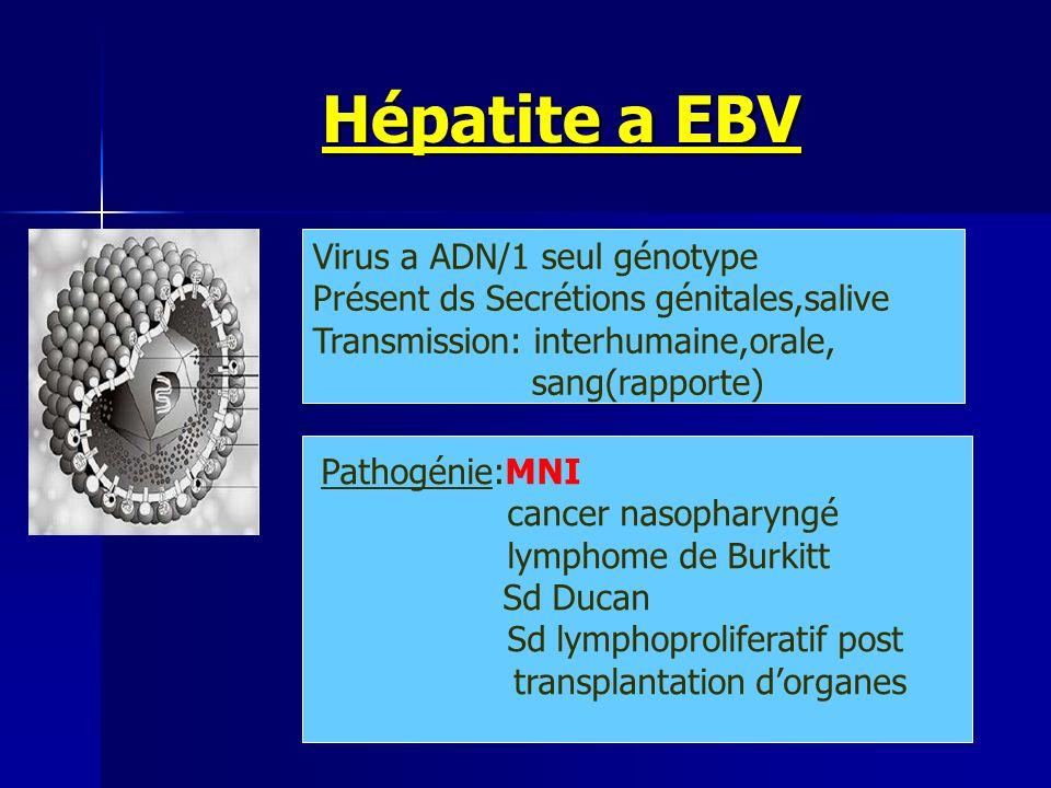 Hépatite a EBV Virus a ADN/1 seul génotype