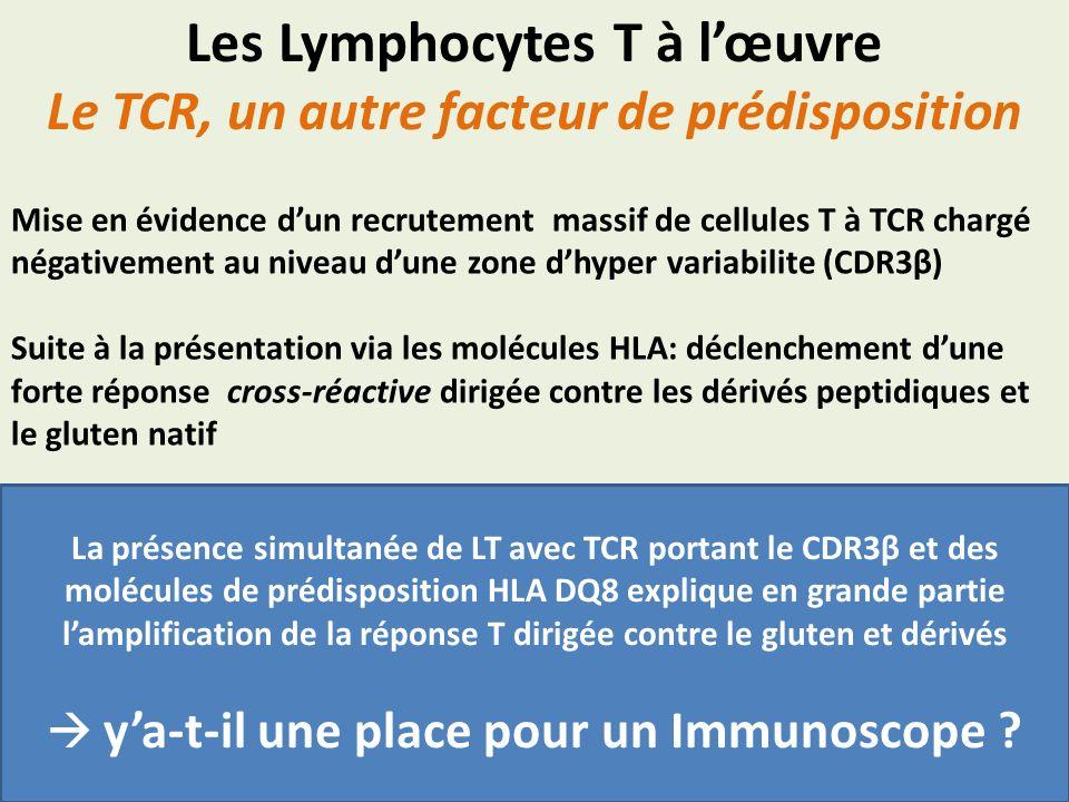 Les Lymphocytes T à l'œuvre