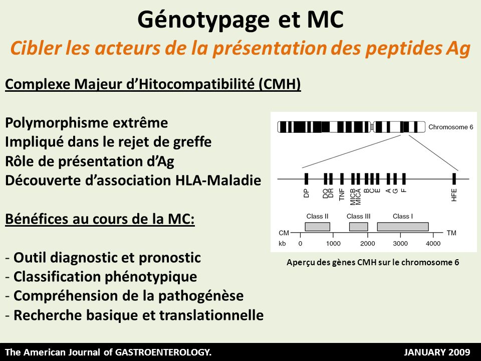 Cibler les acteurs de la présentation des peptides Ag