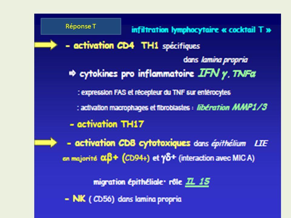 Physiopathologie Réponse T