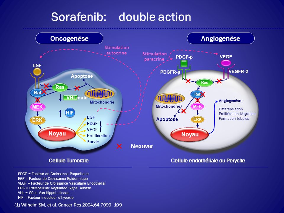Sorafenib: double action