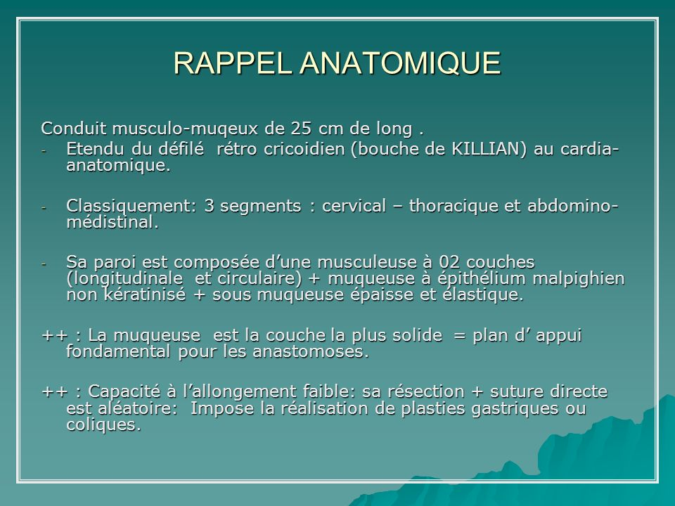 RAPPEL ANATOMIQUE Conduit musculo-muqeux de 25 cm de long .
