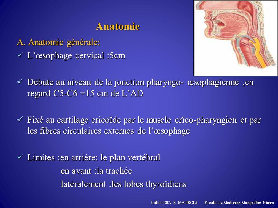 Anatomie A. Anatomie générale: L'œsophage cervical :5cm