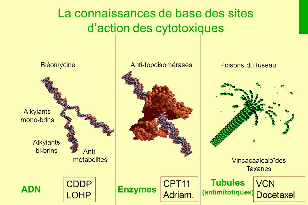 La connaissances de base des sites d'action des cytotoxiques