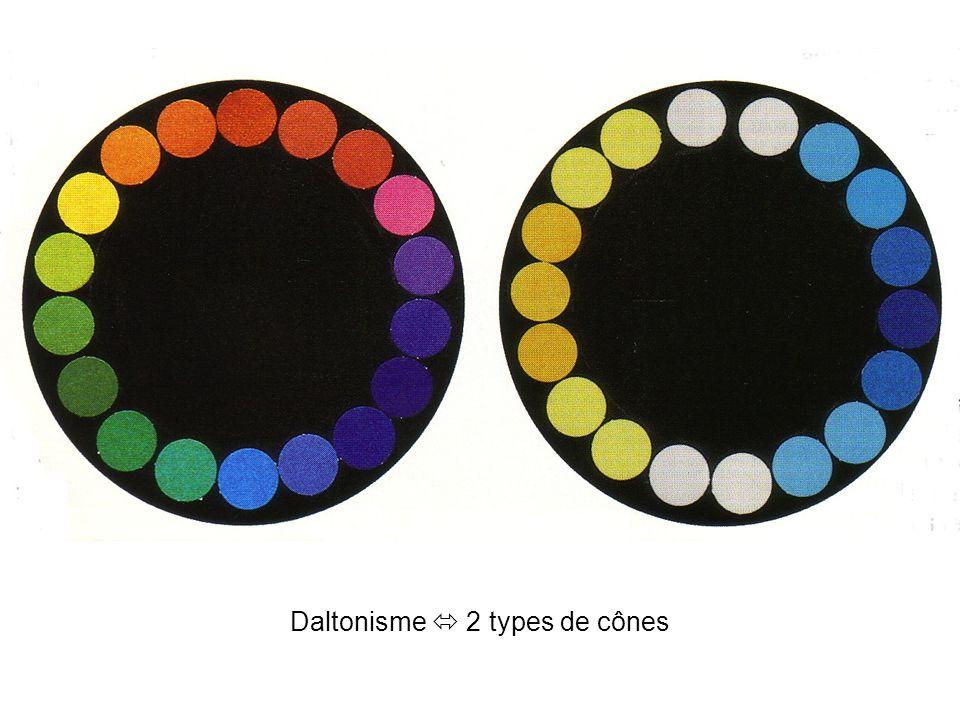 Daltonisme  2 types de cônes