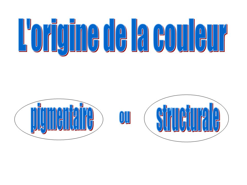 L origine de la couleur structurale pigmentaire ou