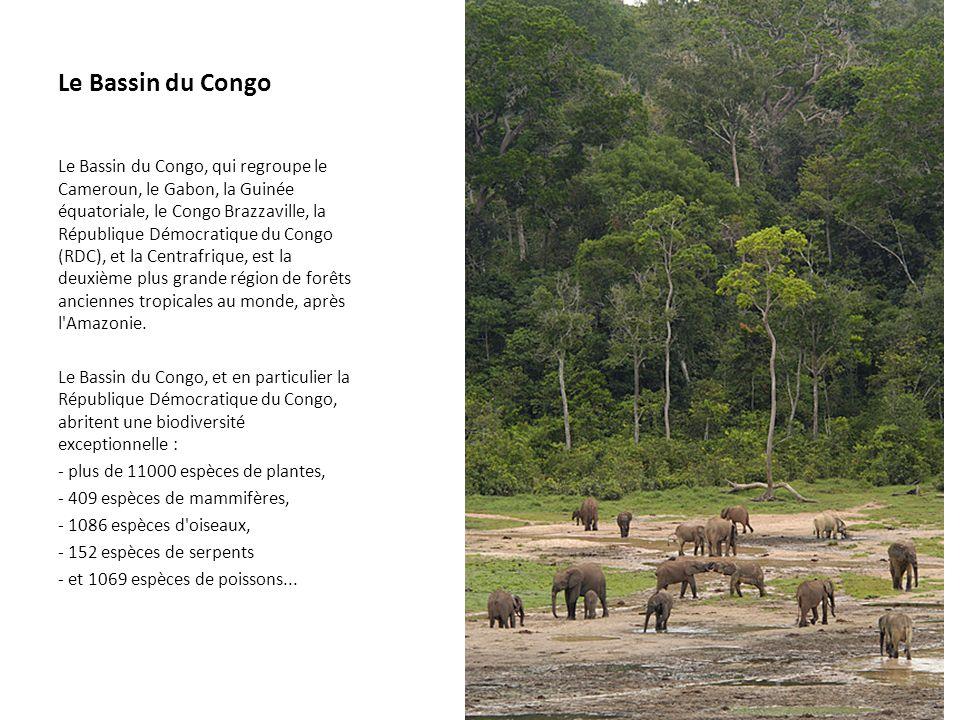 Le Bassin du Congo