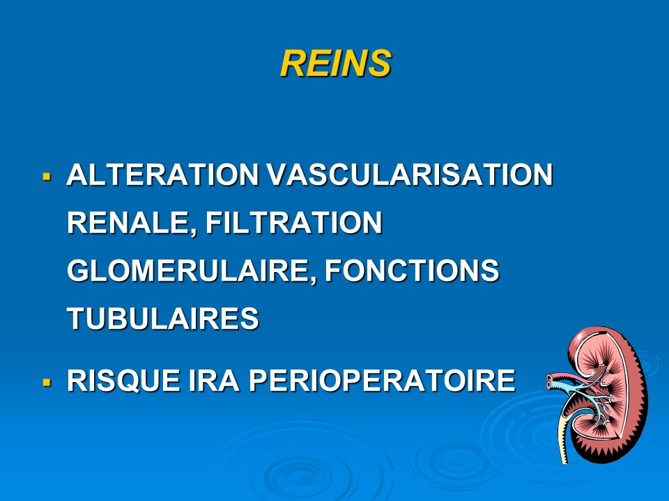 REINS ALTERATION VASCULARISATION RENALE, FILTRATION GLOMERULAIRE, FONCTIONS TUBULAIRES.