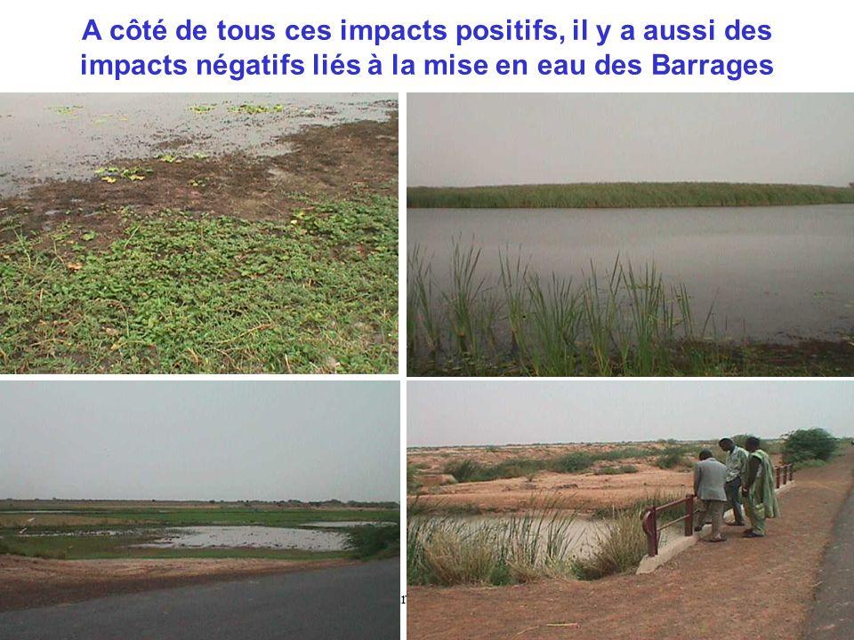 A côté de tous ces impacts positifs, il y a aussi des impacts négatifs liés à la mise en eau des Barrages