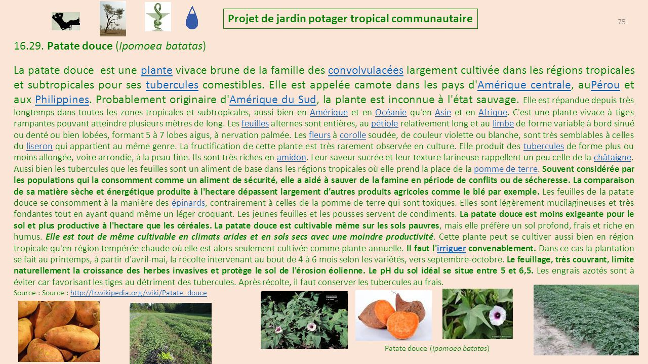 projet de jardins potagers tropicaux communautaire et familiaux ppt t l charger. Black Bedroom Furniture Sets. Home Design Ideas