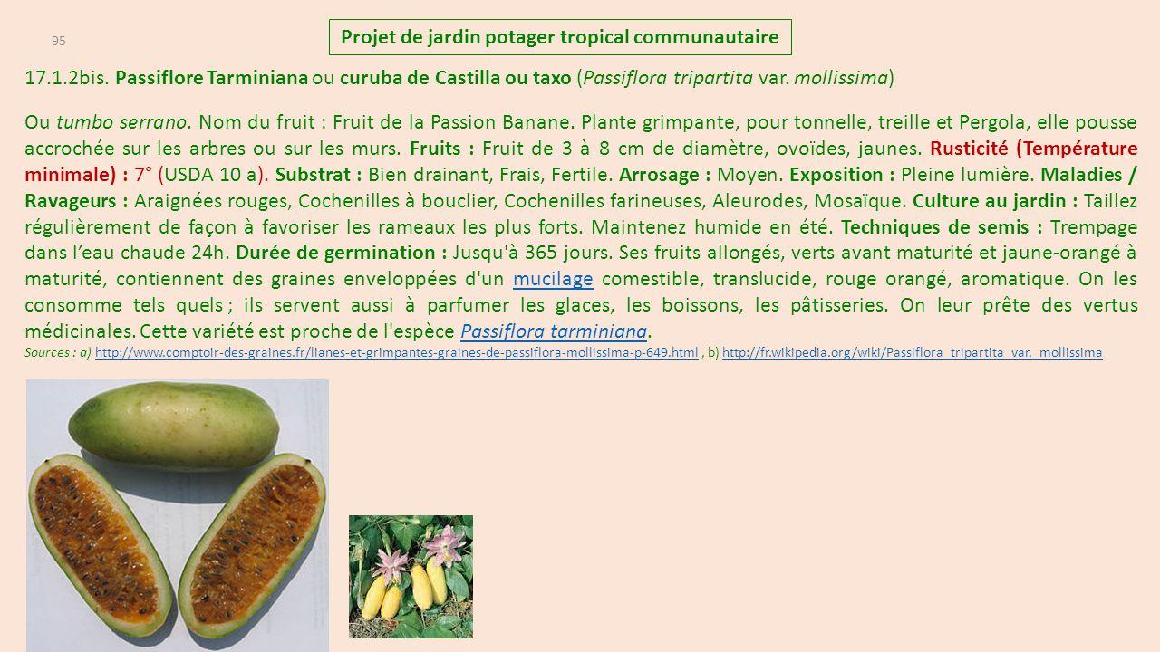 Projet de jardin potager tropical communautaire