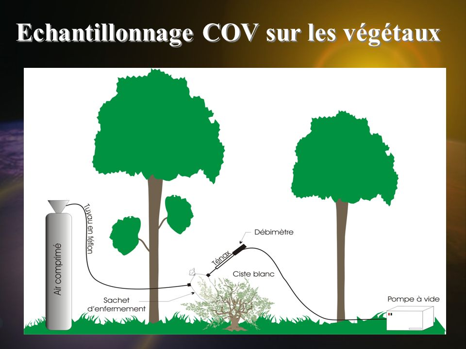 Echantillonnage COV sur les végétaux