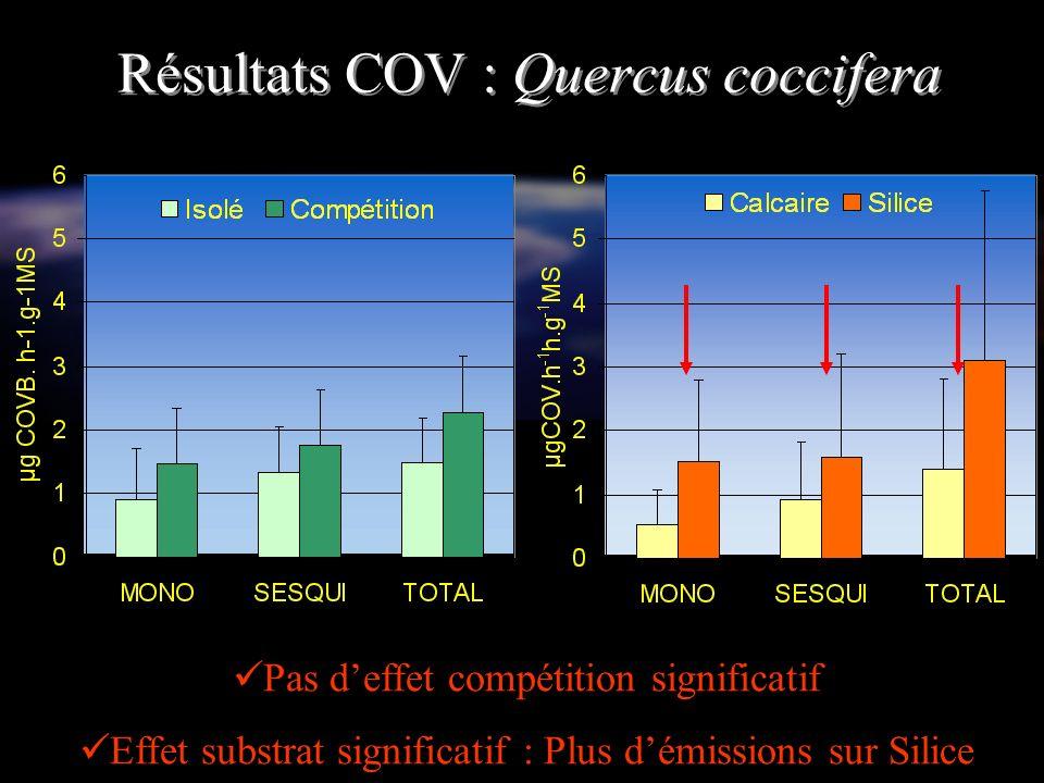 Résultats COV : Quercus coccifera