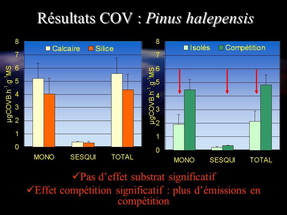 Résultats COV : Pinus halepensis