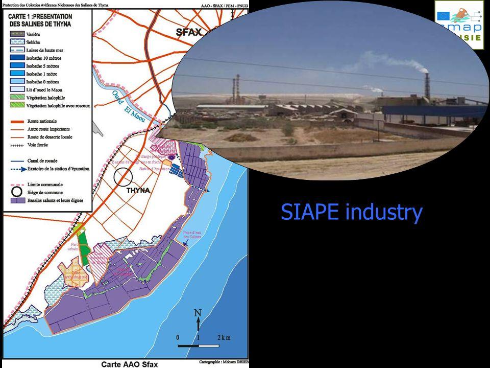 SIAPE industry