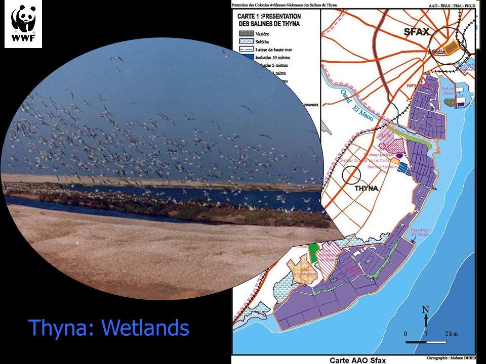 Thyna: Wetlands
