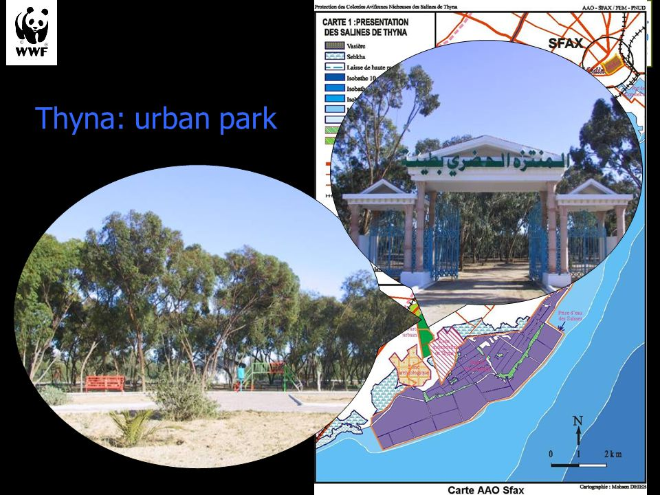 Thyna: urban park