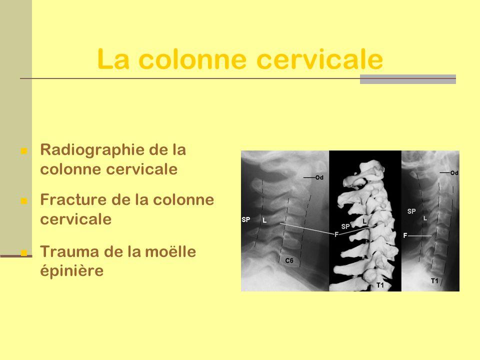 La colonne cervicale Radiographie de la colonne cervicale