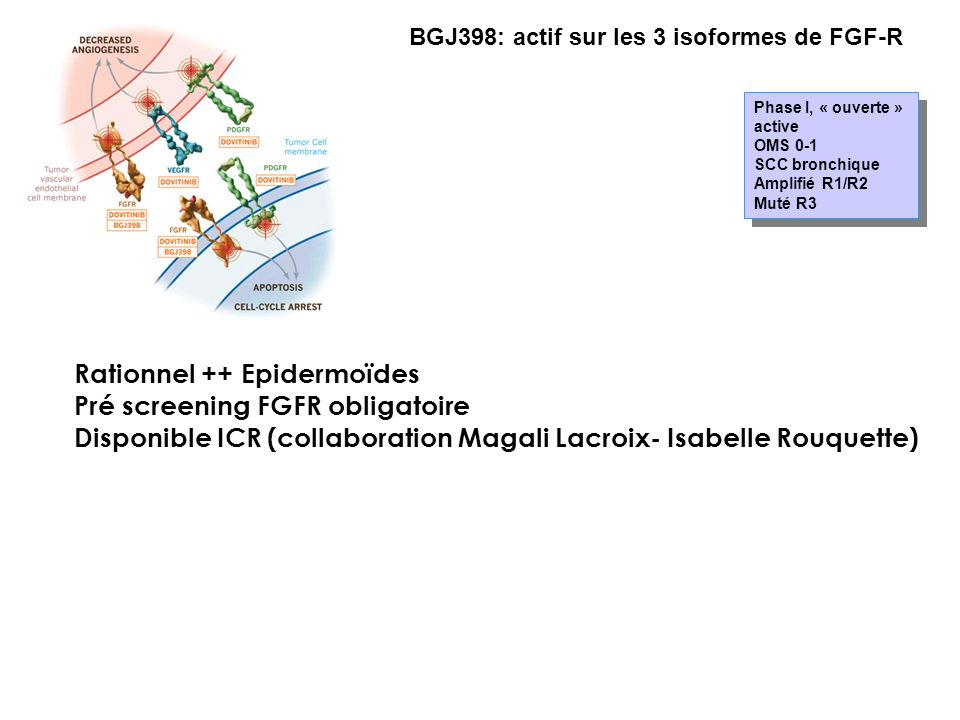 Rationnel ++ Epidermoïdes Pré screening FGFR obligatoire