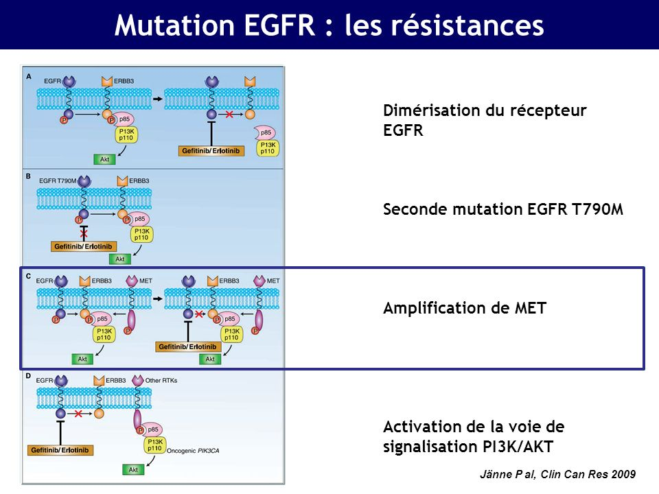 Mutation EGFR : les résistances