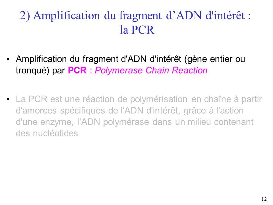 2) Amplification du fragment d'ADN d intérêt : la PCR