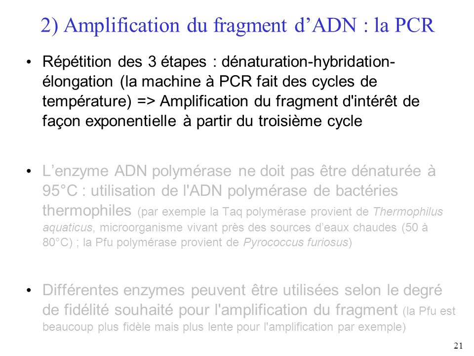 2) Amplification du fragment d'ADN : la PCR
